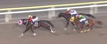 グレンツェント@横山典弘騎手2番人気!フェブラリーステークス2017枠順確定前予想オッズ・登録馬騎手想定